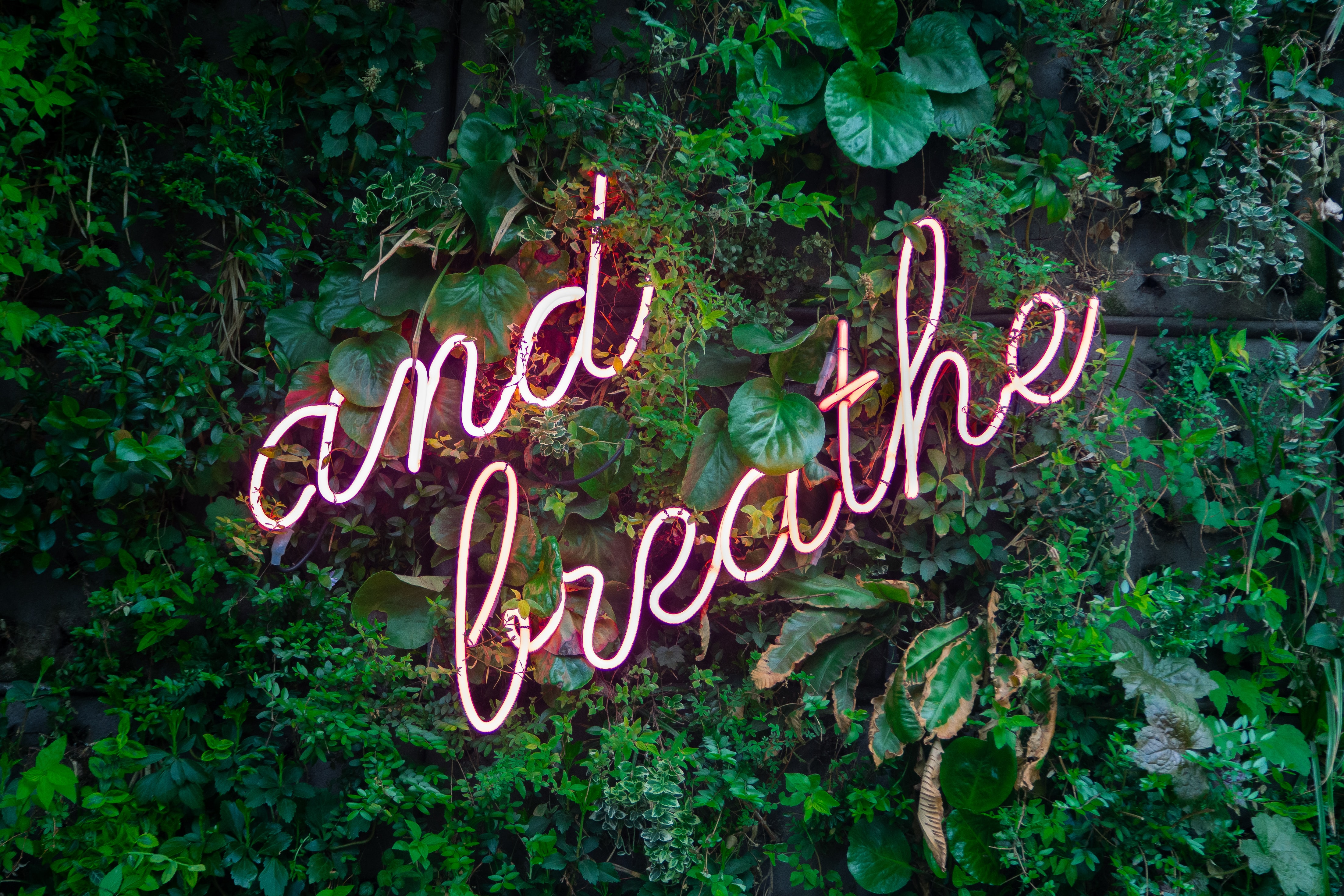 "Nestled in a wall of leaves, a pink neon sign says ""and breathe"" in cursive."